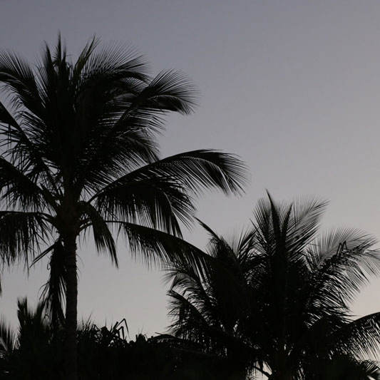 Tall palms silhouetted against the sky at dusk